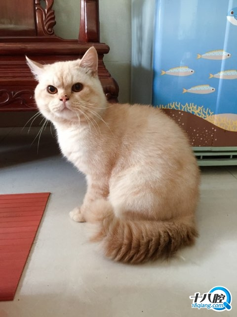 壁纸 动物 狗 狗狗 猫 猫咪 小猫 桌面 480_640 竖版 竖屏 手机