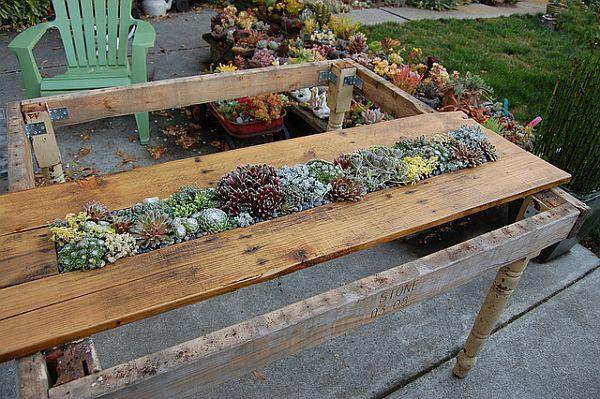 废旧木板diy制作创意绿色植物点缀的餐桌盆栽 装修