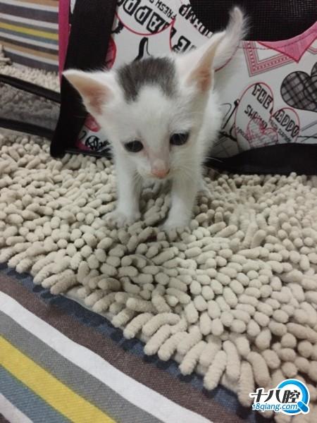 壁纸 动物 猫 猫咪 小猫 桌面 450_600 竖版 竖屏 手机