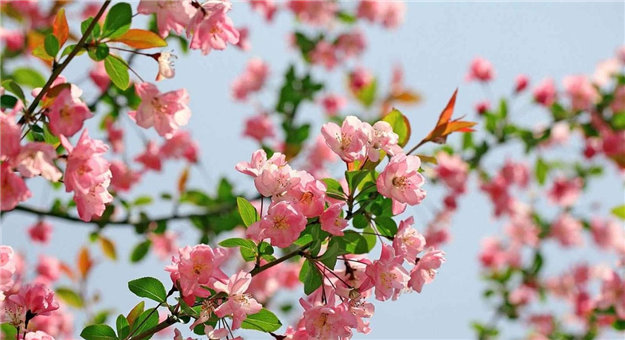 我的原创诗之【春暖花开组诗】